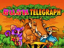 Лесной Телеграф: игровой Гаминатор онлайн